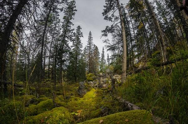 Замшелые камни в лесу