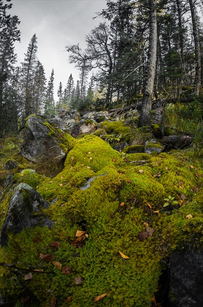 Замшелые камни в лесу-2