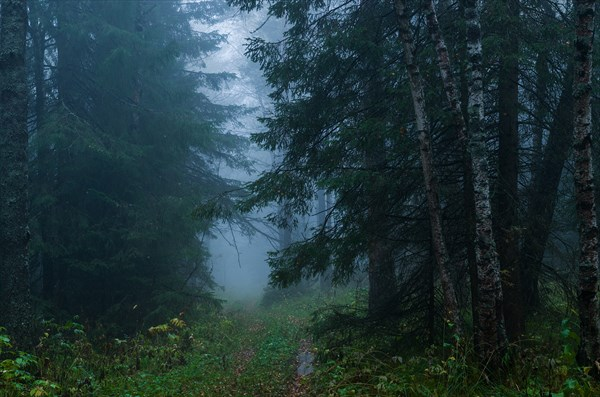 В тёмном лесу 1