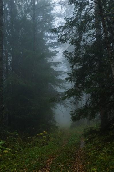 В тёмном лесу 2