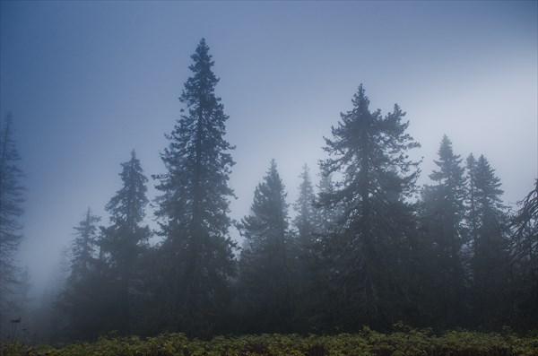 Мгла и туман
