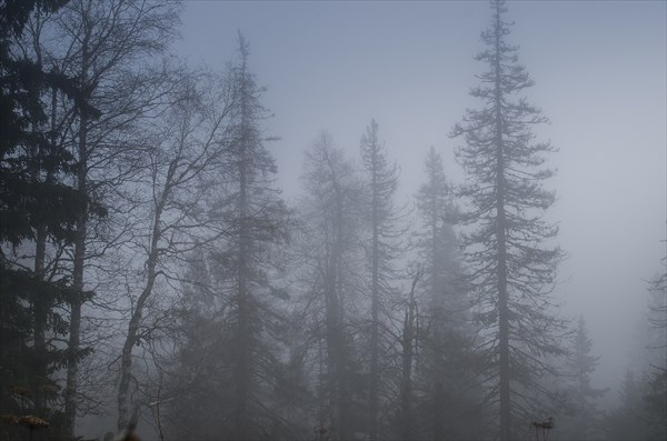 Мгла и туман 2
