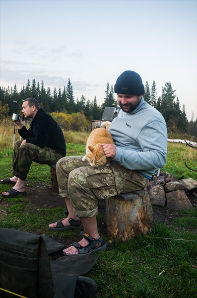 Киалимский кот