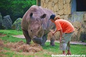 Носорог и Ильич в зоопарке Санто-Доминго