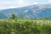 Сады в предгорьях Ронских Альп