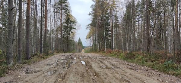 Дорога вдоль полигона
