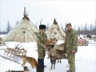 Три дня у кочевых оленеводов Крайнего Севера