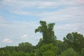 Дерево- птенец.