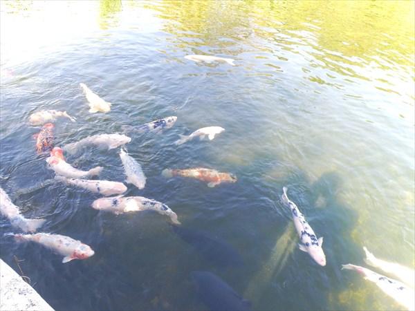 205-Рыбки