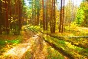 Дорога через лес...