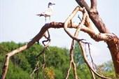 441 Одинокая чайка