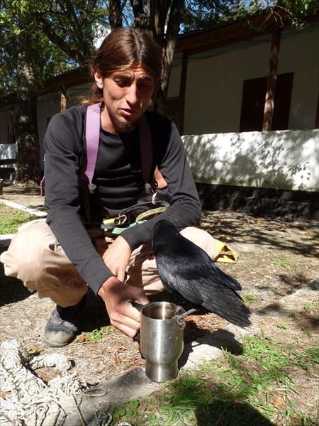 Купание ворона в кружке
