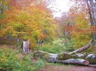 Буковый лес