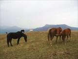 Лошадки на Демерджи