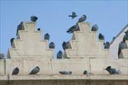 Интересная архитектурная находка для голубей