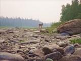 Река Хулга