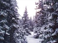 02 Зимний лес