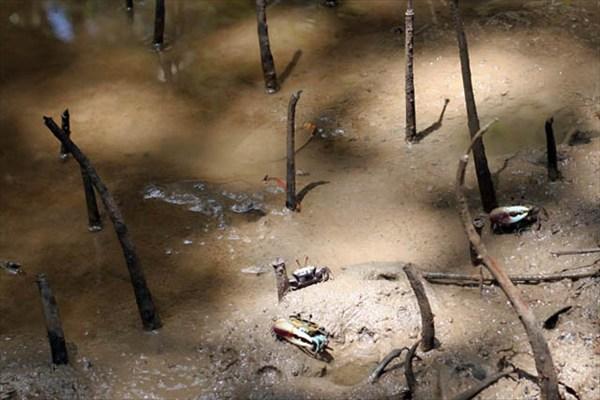 Мангровы болота крупным планом
