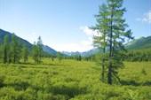 Долина р. Орзагай. Вид на Хребет Агульские белки.