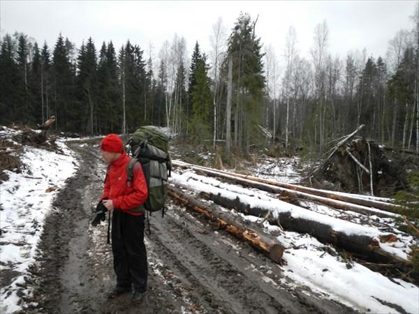 Дорога лесорубов