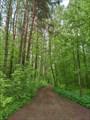 Дорога к мысу Шатунок