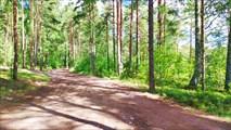 Участок дороги в Подборовье