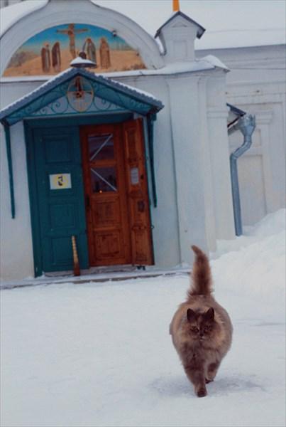 Кошка у Крестовоздвиженской церкви