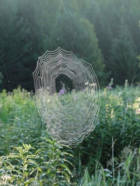 Кружево паутины.