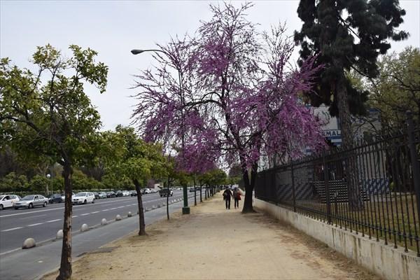 Весна  городе