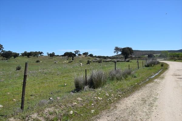 Дорога вдоль пастбищ