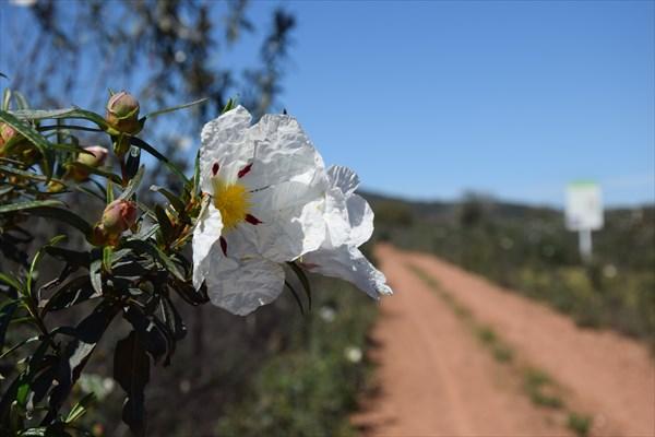 Цветы вдоль дороги