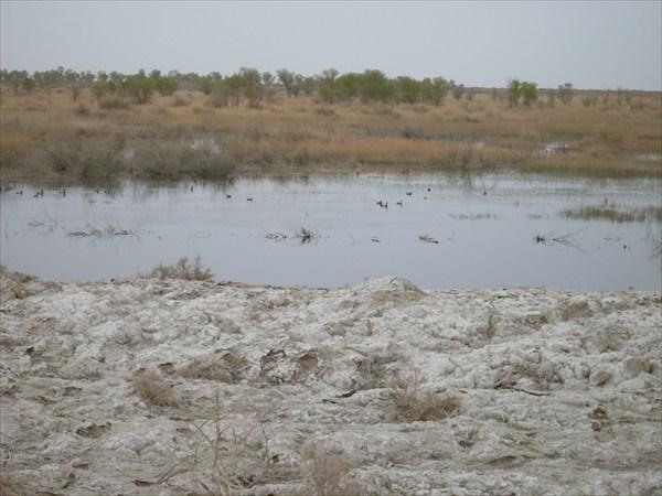Вода в болотце, разумеется, солёная