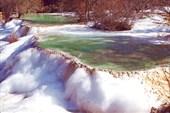 Замерзшие гуры