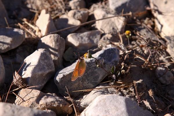 Первая или последняя бабочка в этом году?