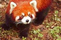 Мордашка fire fox