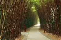 Дорожки в парке по разведению панд