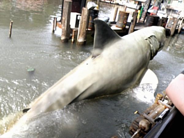 124-Акула