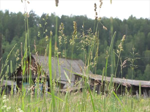 Деревня Иструть