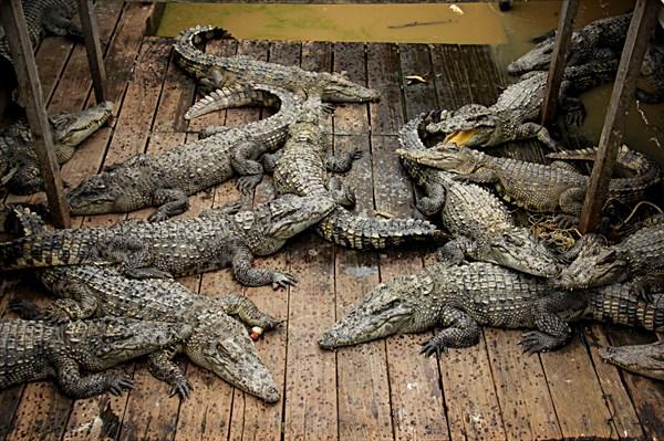 044-Крокодилы
