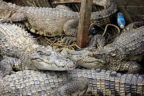 045-Крокодилы