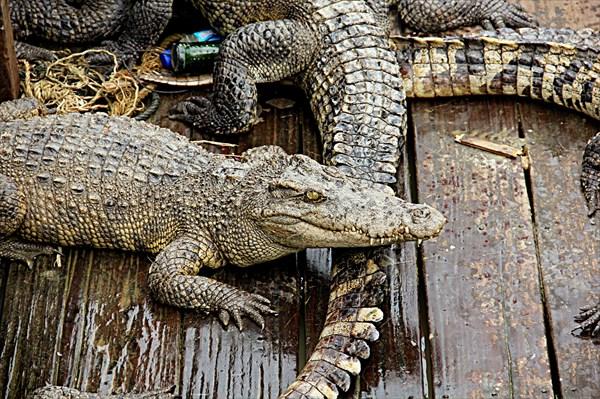 046-Крокодилы