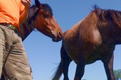 Кони жуют снарягу