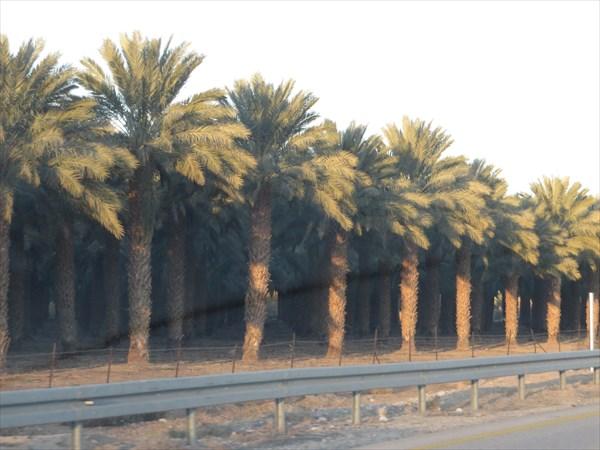 177-Пальмы