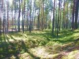 Светлый лес