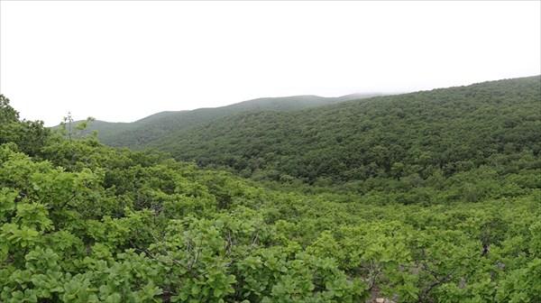 Вид со скалистых останцев