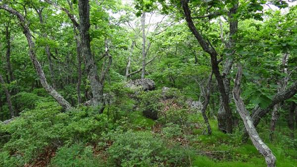Лес на горе Скалистая
