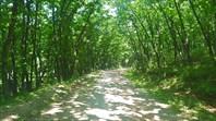Дорога от Пресного в Тимофеевку