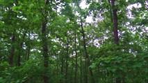 Лес за Веселым Яром