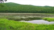 Озеро с лилиями