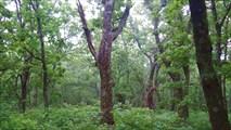 Лес на горе Голая